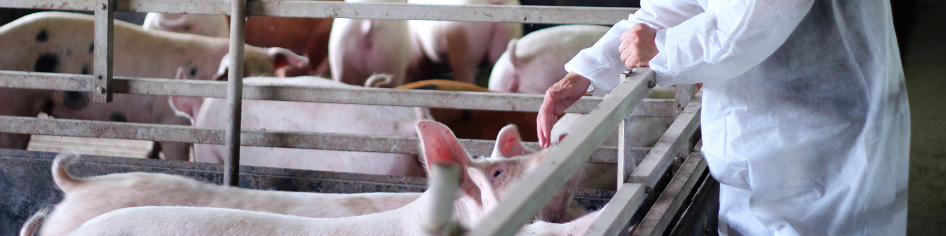 Bioseguridad, Salud y Bienestar animal | MACOGA
